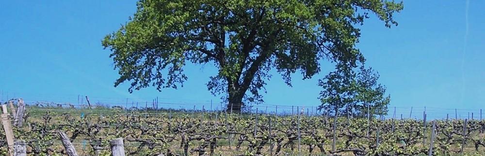 Vins, vignes et vignerons : passages, messages et métissages.