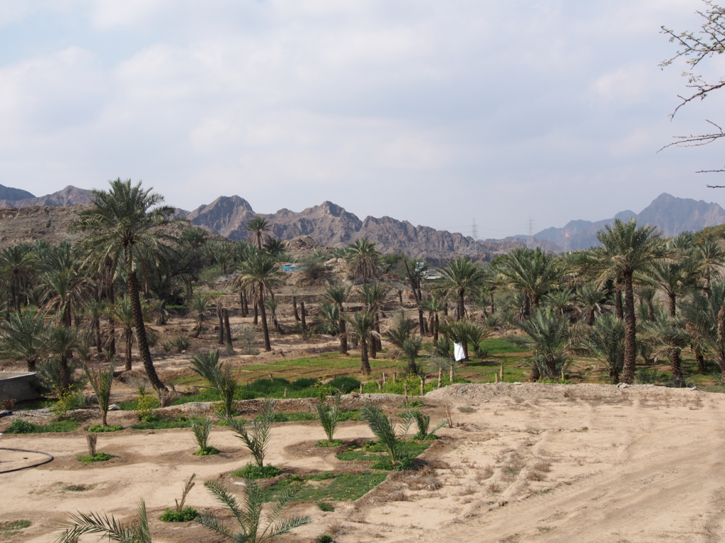 Oasis de Masafi (Photo : C. Calastrenc)